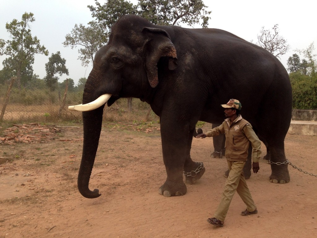 They used to be wild... One can see the sadness in their eyes now. That elephant is huge!